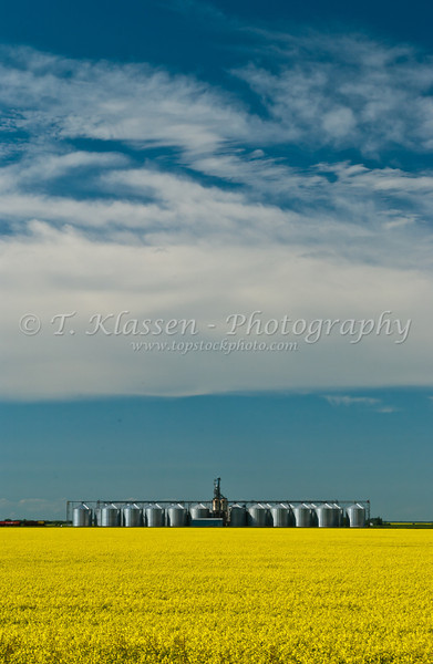 Prairie grain bins and canola field at Rathwell, Manitoba Canada