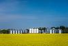 Farm grain bins in a yellow canola field near MIami, Manitoba, Canada.