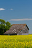 An old barn and grain storage bins in a blooming canola field near Roland, Manitoba, Canada.