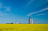 Agricore grain storage elevator with yellow canola field at Fannystelle, Manitoba, Canada.