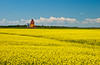 Pioneer grain elevator with blooming canola field at Carey, Manitoba, Canada.