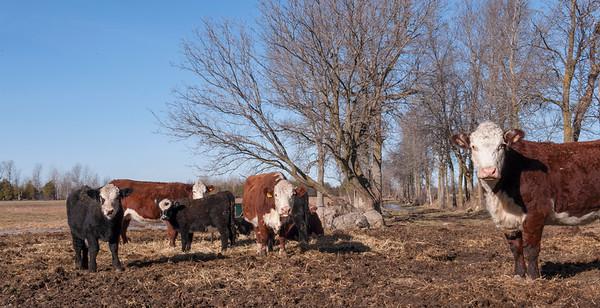 Anderson Farm 289