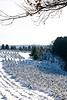 Summers Christmas Tree Farm, Dane County, Wisconsin