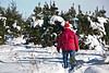 Selecting a Tree, Summers Christmas Tree Farm, Dane County, Wisconsin