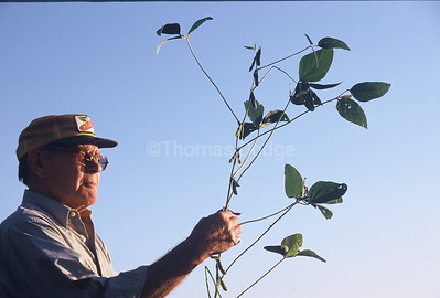 Dad checking soybean plant.