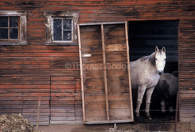 Horse barn, Idaho.