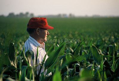 Dad in corn.