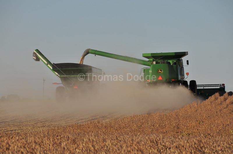 Soybean harvest, Truman, MN.