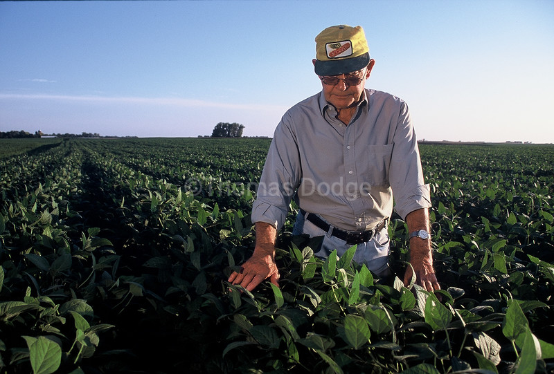 Dad checking soybeans.