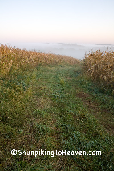 Foggy Cornfield, Crawford County, Wisconsin