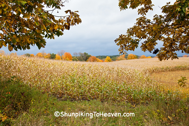Autumn Cornfield, Sauk County, Wisconsin