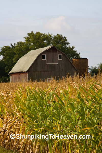 Gambrel Roof Barn and Cornfield, Dane County, Wisconsin