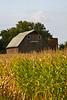 Gambrel Roof Barn and Cornfield, Dane County, Wisconsin