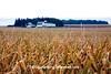 Farm Scene, Black Hawk County, Iowa