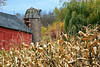 Autumn Farm Scene with Tile Silo, Golden Corn, and Weeping Willow, Sauk County, Wisconsin