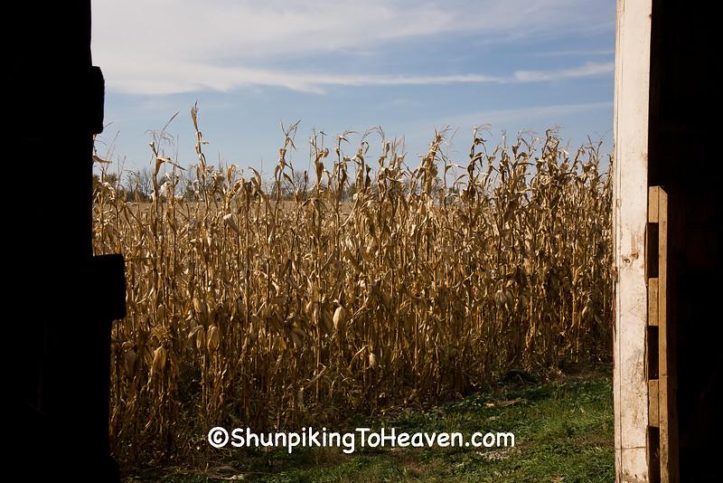 View of Cornfield from Barn Door, Stephenson County, Illinois