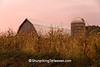 Barn and Silo Amidst the Corn Field, Richland County, Wisconsin