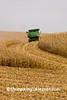 Corn Harvest, Filmore County, Minnesota