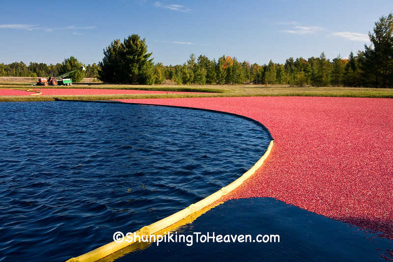 Cranberry Harvest at Potter Cranberry, Monroe County, Wisconsin