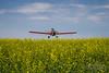 Crop Dusting - An aerial applicator spraying a field using a Thrush airplane!