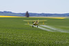 Crop Dusting - Aerial Applicator spraying a field!