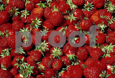 Strawberries 1 04 038