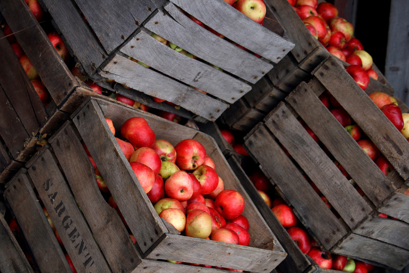 Apples in crates, waiting the cider press.