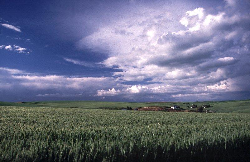 Wheat Rimrock
