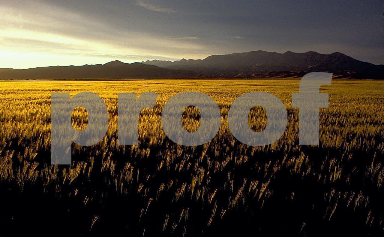 Wheat, Idaho 1 06 054