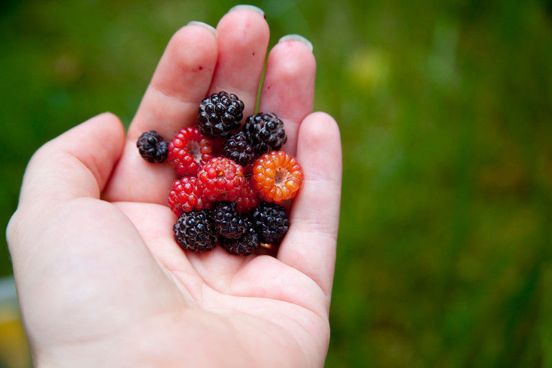 A berry in the hand is worth ... a handful of berries!