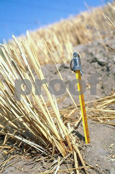 Wheat field120F 1 06 044a
