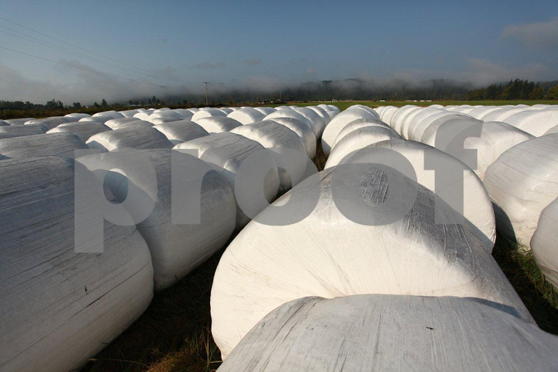 Round bales of silage wrapped in white plastic.  Round bales of silage wrapped in white plastic.