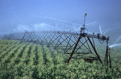 Irrigation corn