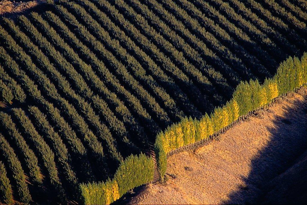 Stemilt orchard Wenatchee