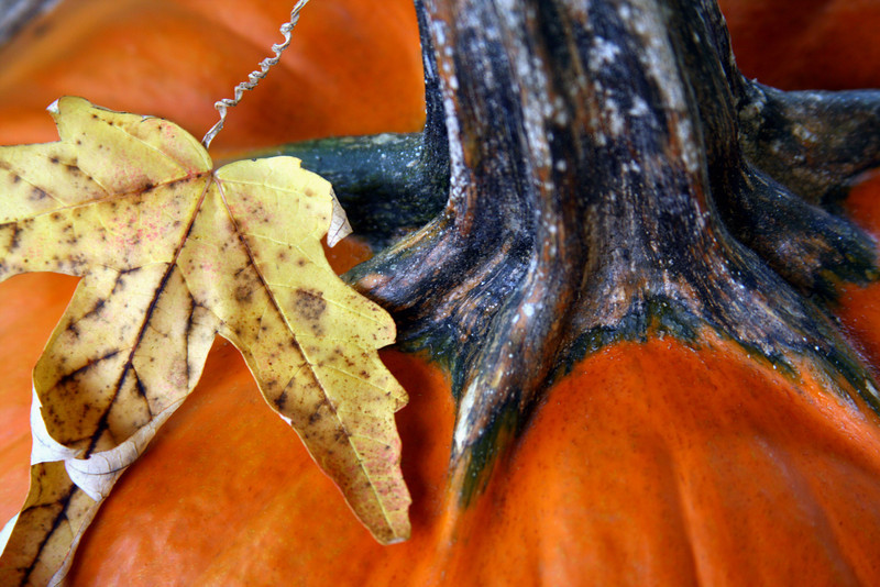 Autumn pumpkin with a dry leaf.