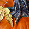 Autumn pumpkin with a dry leaf.