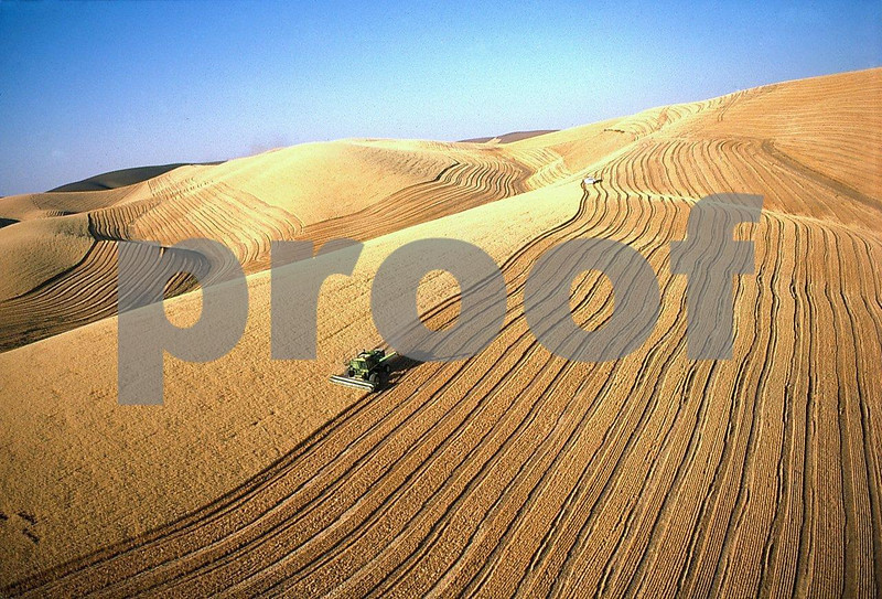 Wheat harvest 1 06 216