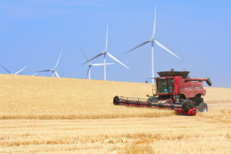 Windmills among the wheat fields in Eastern Washington while the grain is harvested by a combine