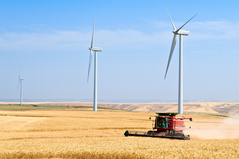 Windmills among the wheat fields in Eastern Washington with a combine harvesting the grain