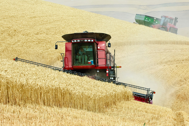 Grain harvest in Dayton, WA