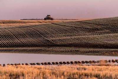 barley 13