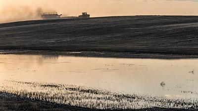 barley 10