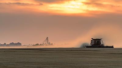 barley 27