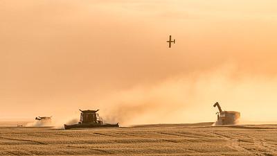 barley 26
