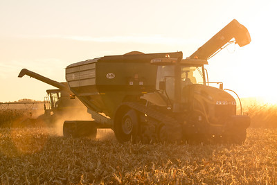 Sunset Corn Harvest