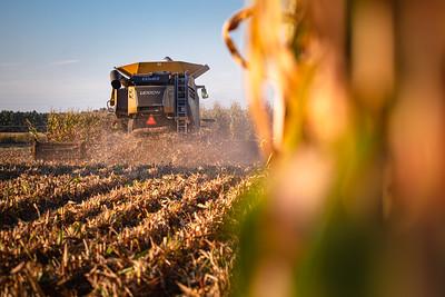 Harvest 2019