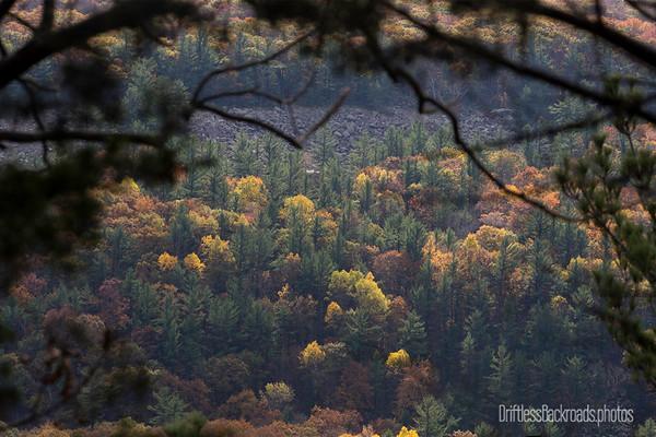 Window into Fall