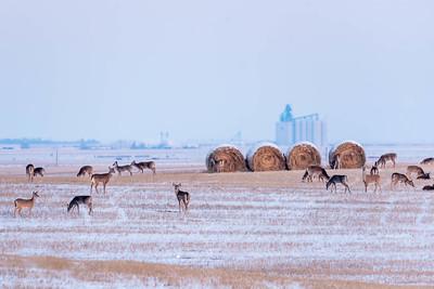 barley 34
