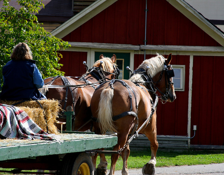 Two draft horses pull a wagon.