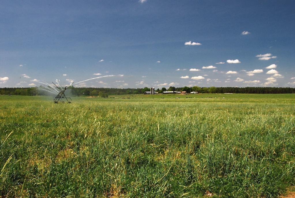 Mennonite farm and field County (GA) July 2008